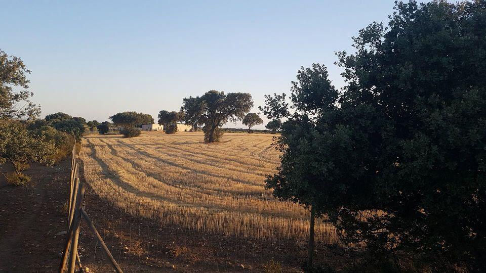 Spanische Landschaft charakteristisch für Toledo - Castilla la Mancha