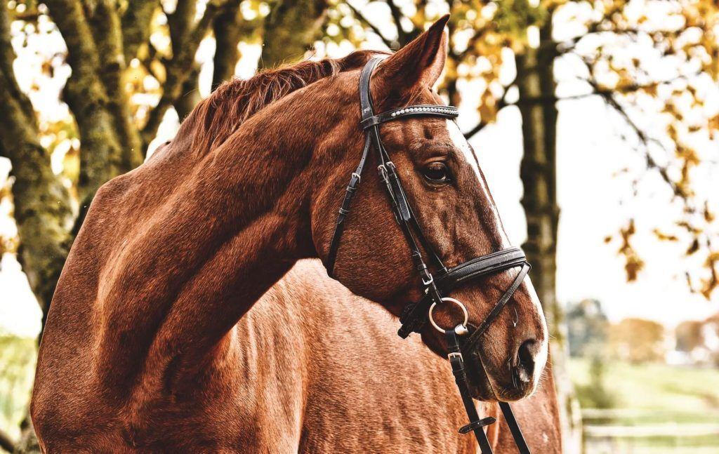montar a caballo por Toledo