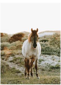 disfruta de las mejores rutas para montar a caballo en Toledo